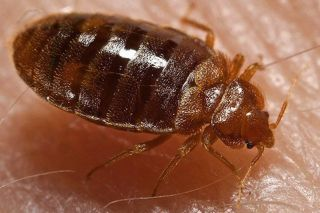 How Cold To Kill Bed Bug Eggs