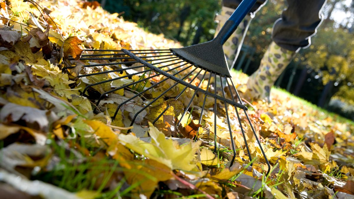 Expert reveals why neglecting this fall gardening chore could be killing your lawn