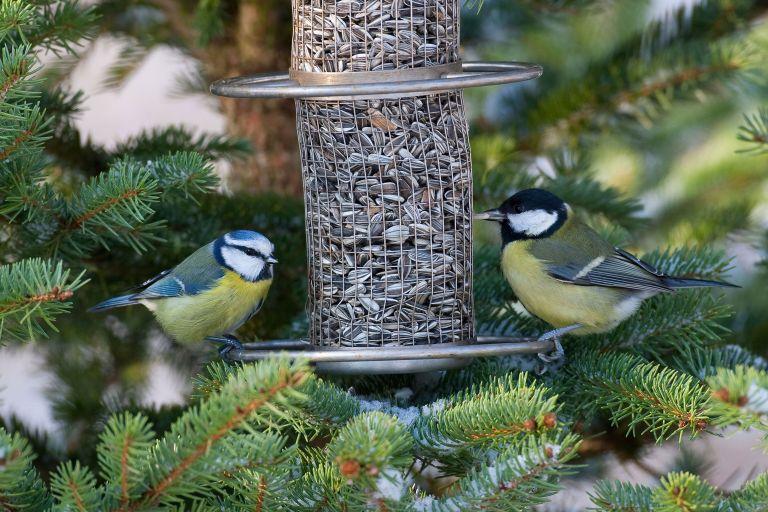 Monty-Don-bird-feeding-tips-FEATURED-ALAMY