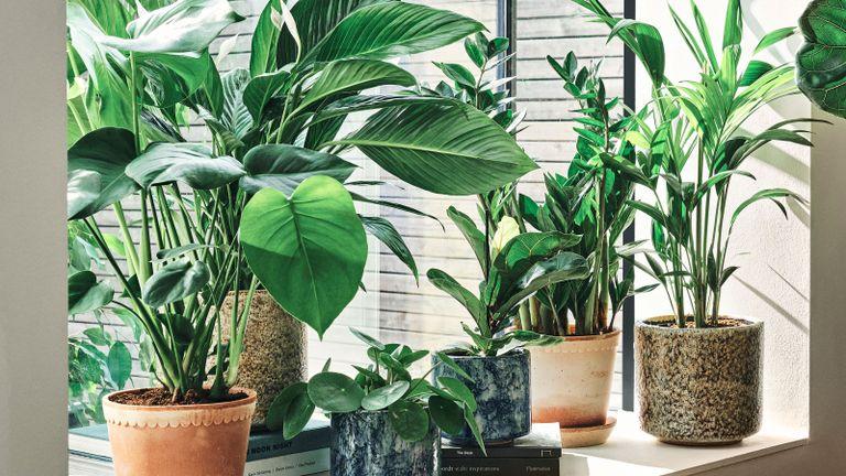 First Look: Soho Home X Leaf Envy - The Houseplant Edit