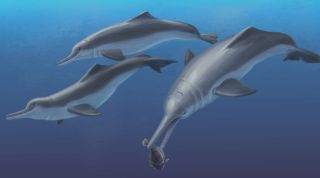 river dolphin, fossil, illustration, ancient