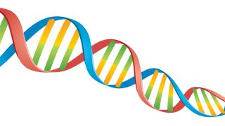 DNA double helix with color coded sections