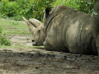 rhino-female-macite-110822-02
