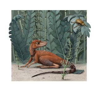 "An illustration of the ""tiny bug slayer,"" Kongonaphon kely, a newly described reptile that lived about 237 million years ago, during the Triassic period, in what is now Madagascar."