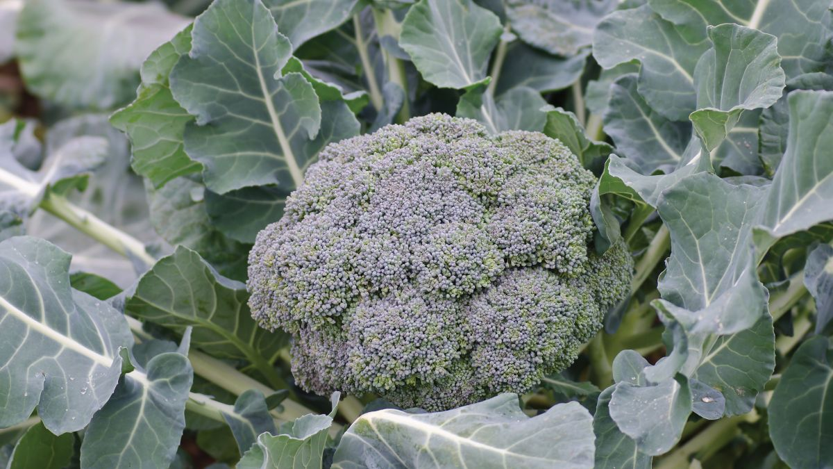5 vegetables to sow now – add these to your grow your own planting list before spring