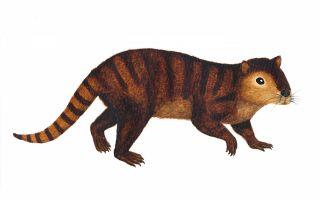 Ancient mammal illustration