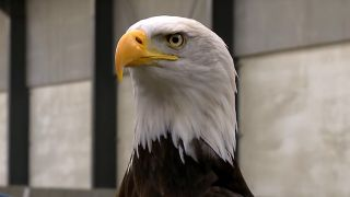 Dutch police are training eagles to take down UAVs