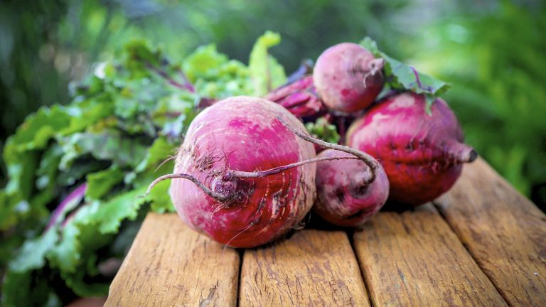 Beetroot Plants - Boltardy from Suttons