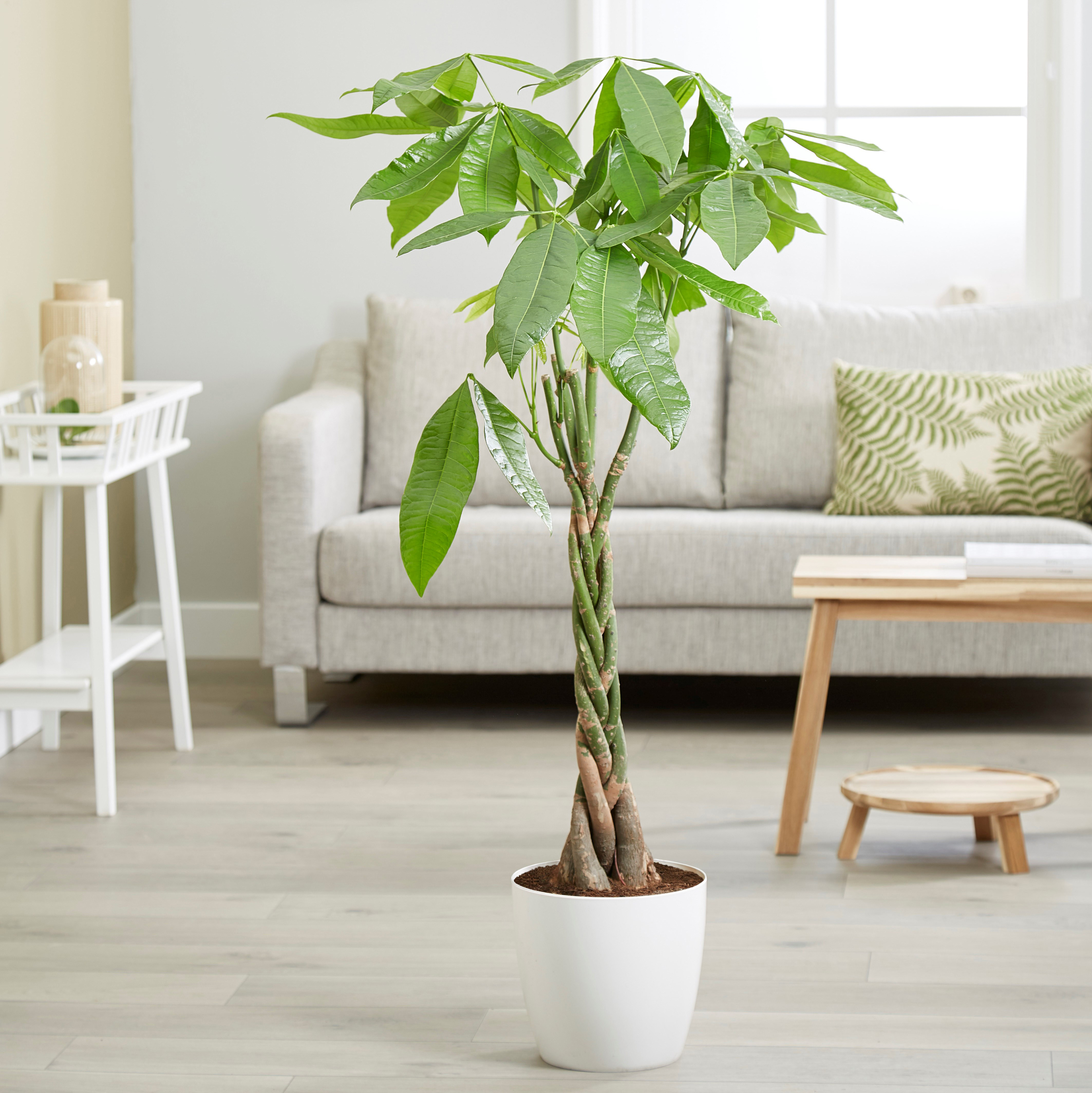 Best Shade Loving Plants Real Homes