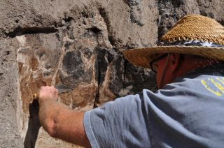 Uncovering bones of ancient bison