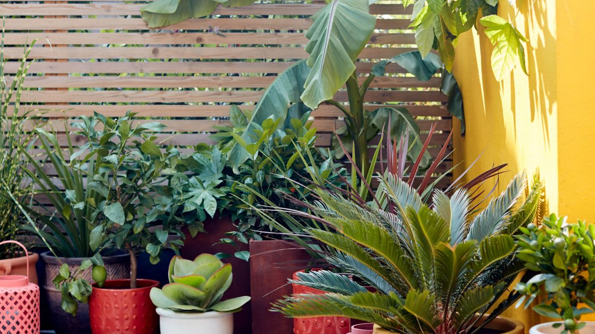 This is the tropical garden trend that is making a BIG impression on Instagram