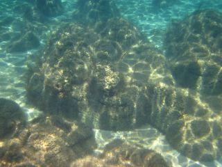 Massive composite stromatolites