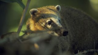 A coati in Earth: The Nature of Our Planet