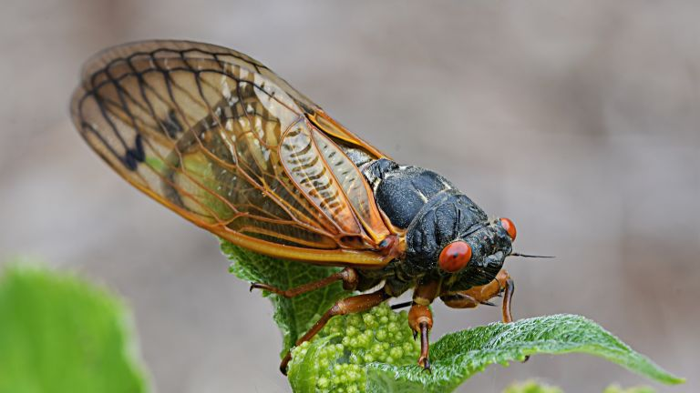 A cicada on a plant