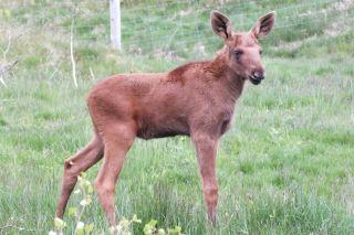 baby animals, wildlife park