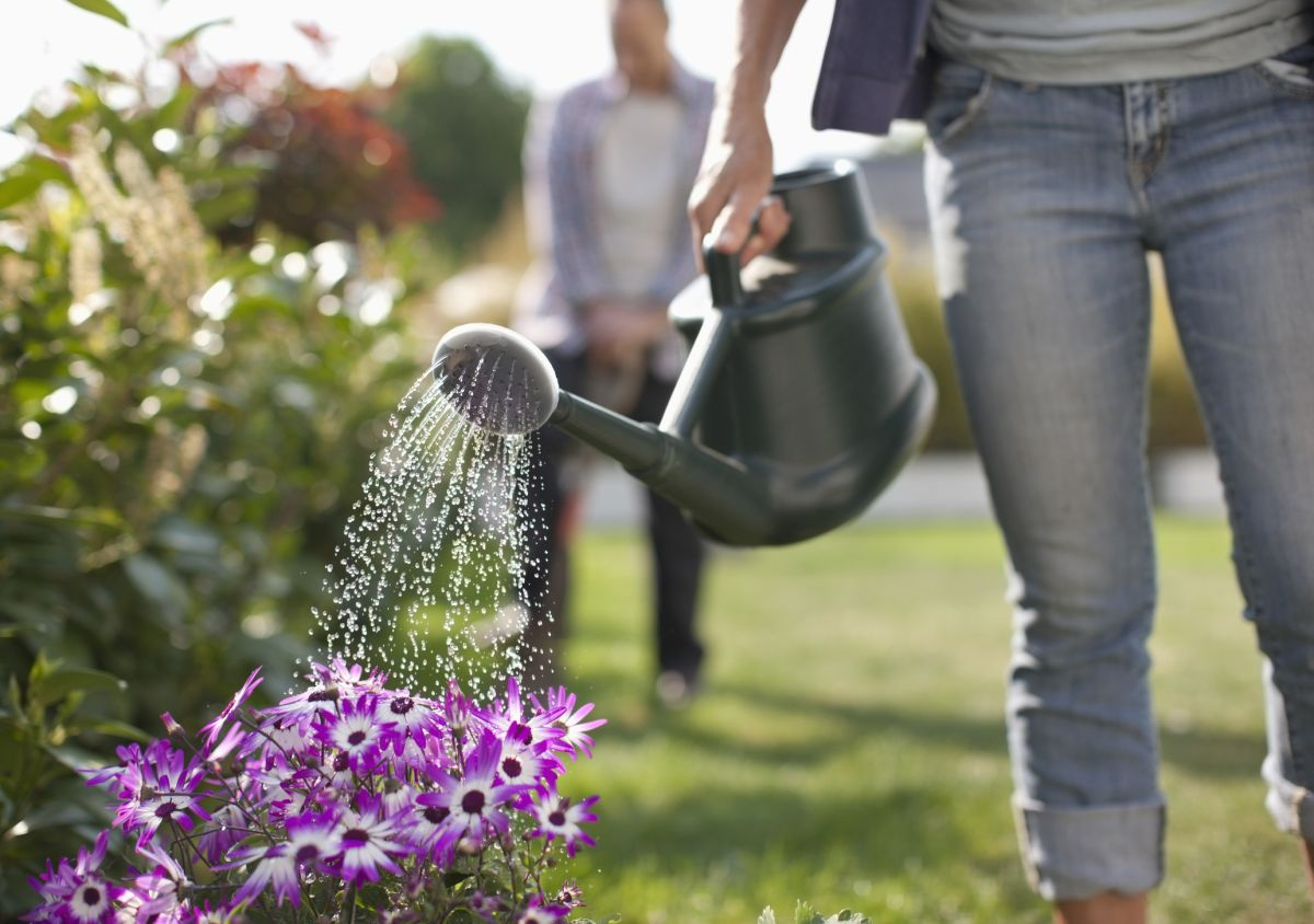 Gardening experts reveal the best and worst time of day to water your plants