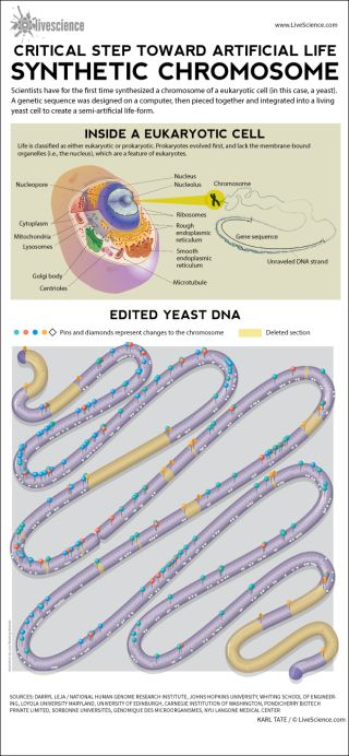 Process by which scientists edited a yeast cell's DNA.