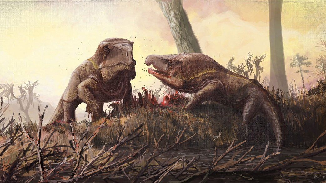 Weird Triassic 'Dragons' Had Massive Heads. Here's Why.