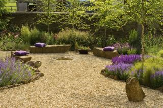 a garden with lavender plants and a gravel base
