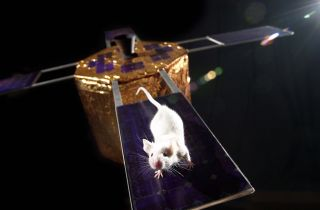 Rodent testing in space