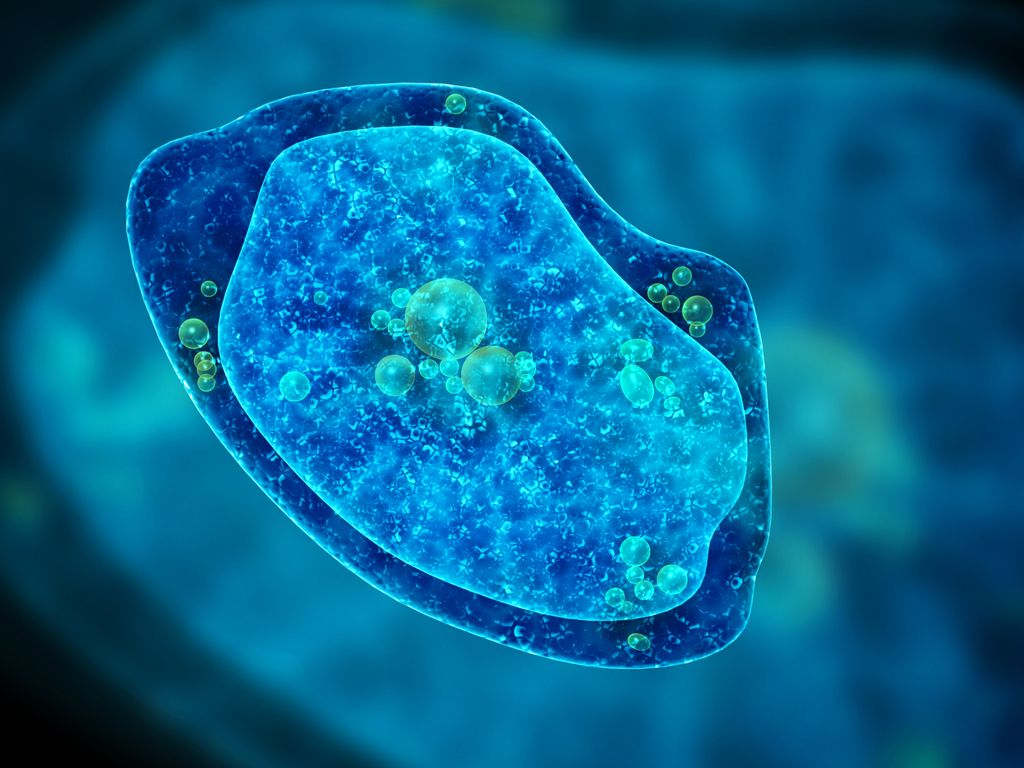 Boy Dies from 'Brain-Eating' Amoeba Infection Picked Up in Hot Spring