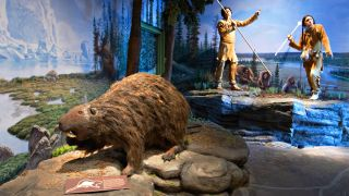 A giant beaver from the Ice Age seen in this exhibit at the Kenosha Public Museum in Wisconsin.