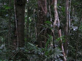 Could the rainforest hold the key to harmless fuel?