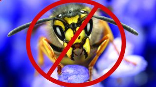 Sony keep your insect infected PS4 consoles away from us