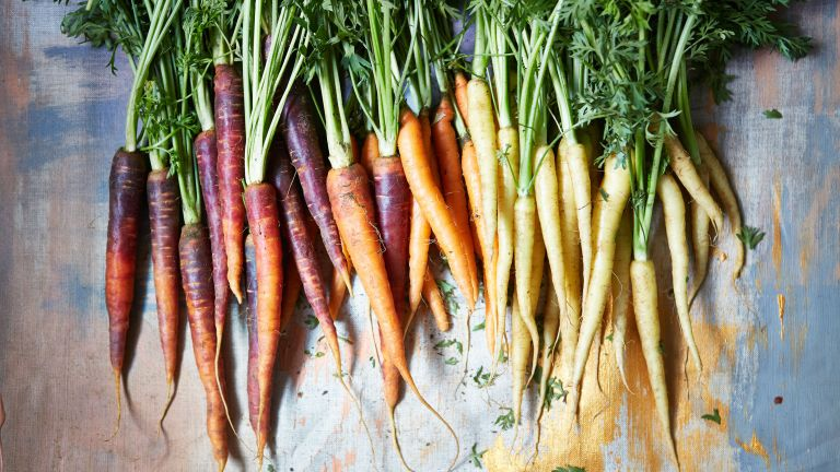 companion plants for carrots – selection of heritage carrots