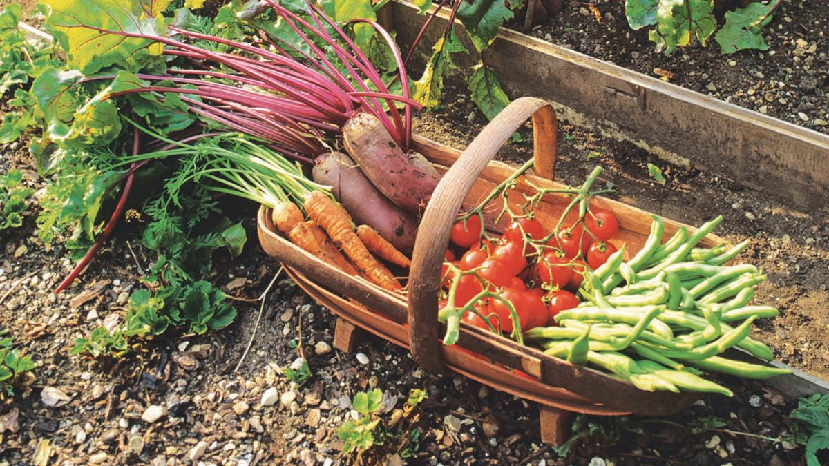 When and how to harvest vegetables