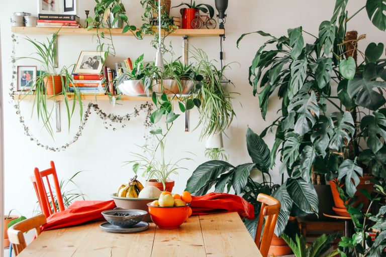 indoor garden ideas: kitchen table surrounded by plants