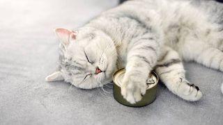 best cat food