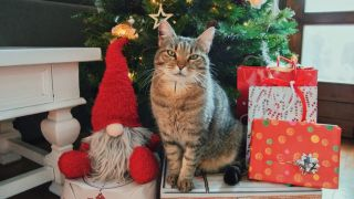 Grey tabby cat sitting by a christmas tree looking for christmas cat toys