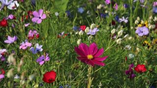 An image of wild purple, pink, and lilac flowers in a flower bed