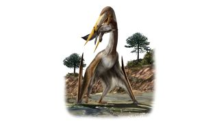 An illustration of the giant pterosaur, Alanqa saharica, whose remains were found in Morocco.