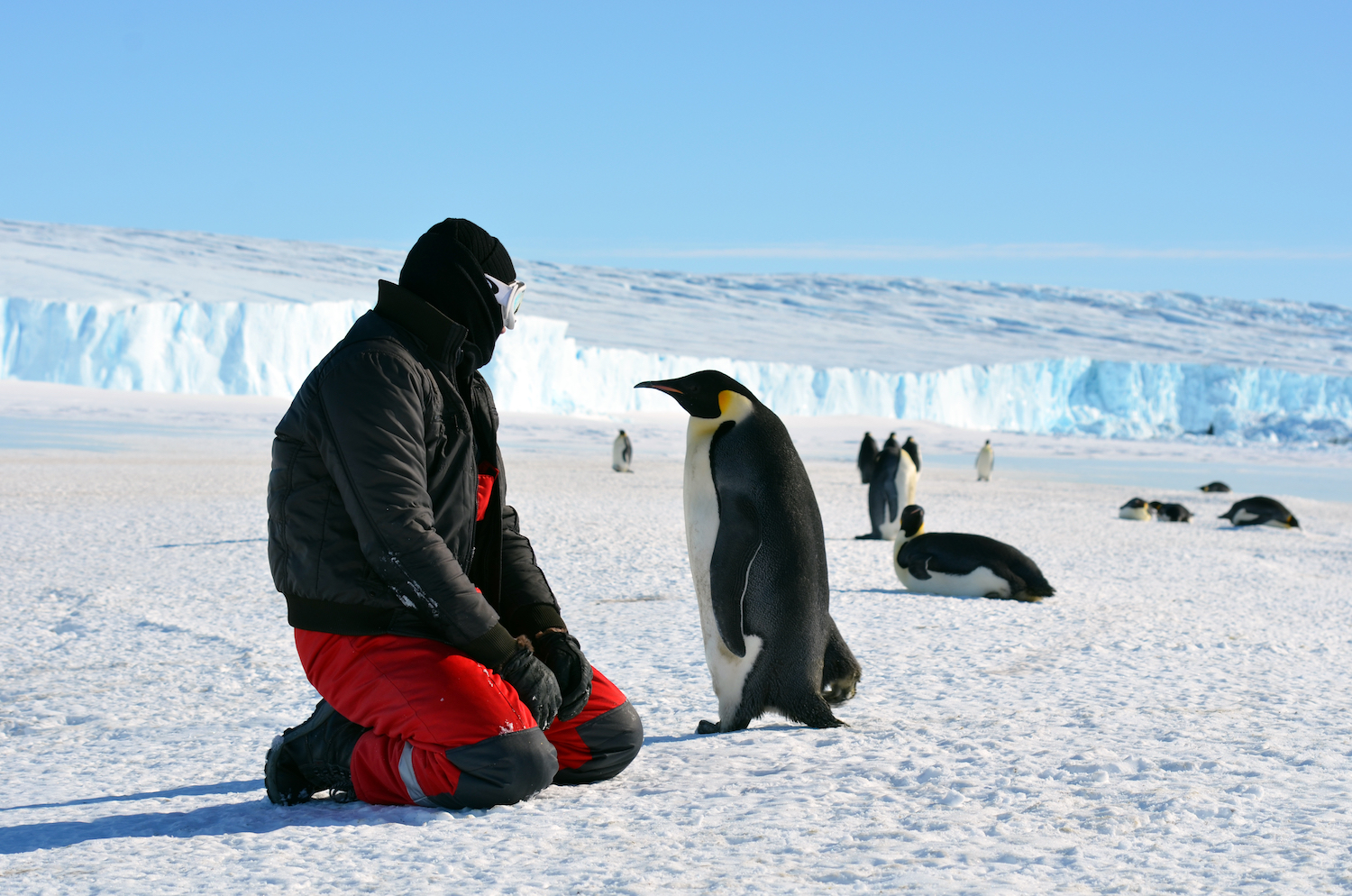 Antarctica: The Southernmost Continent | Live Science
