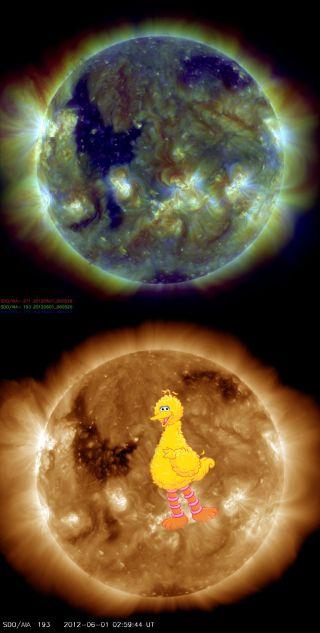 'Big Bird' on the Sun