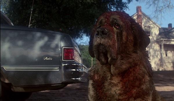 Cujo Messy Dog