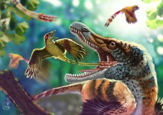 feathers, birds, fossils, gondwana, cretaceous