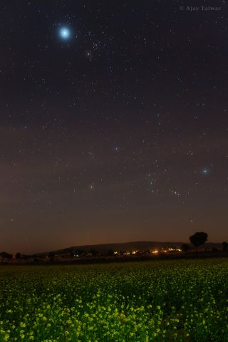 Orion Over Green Fields India Talwar