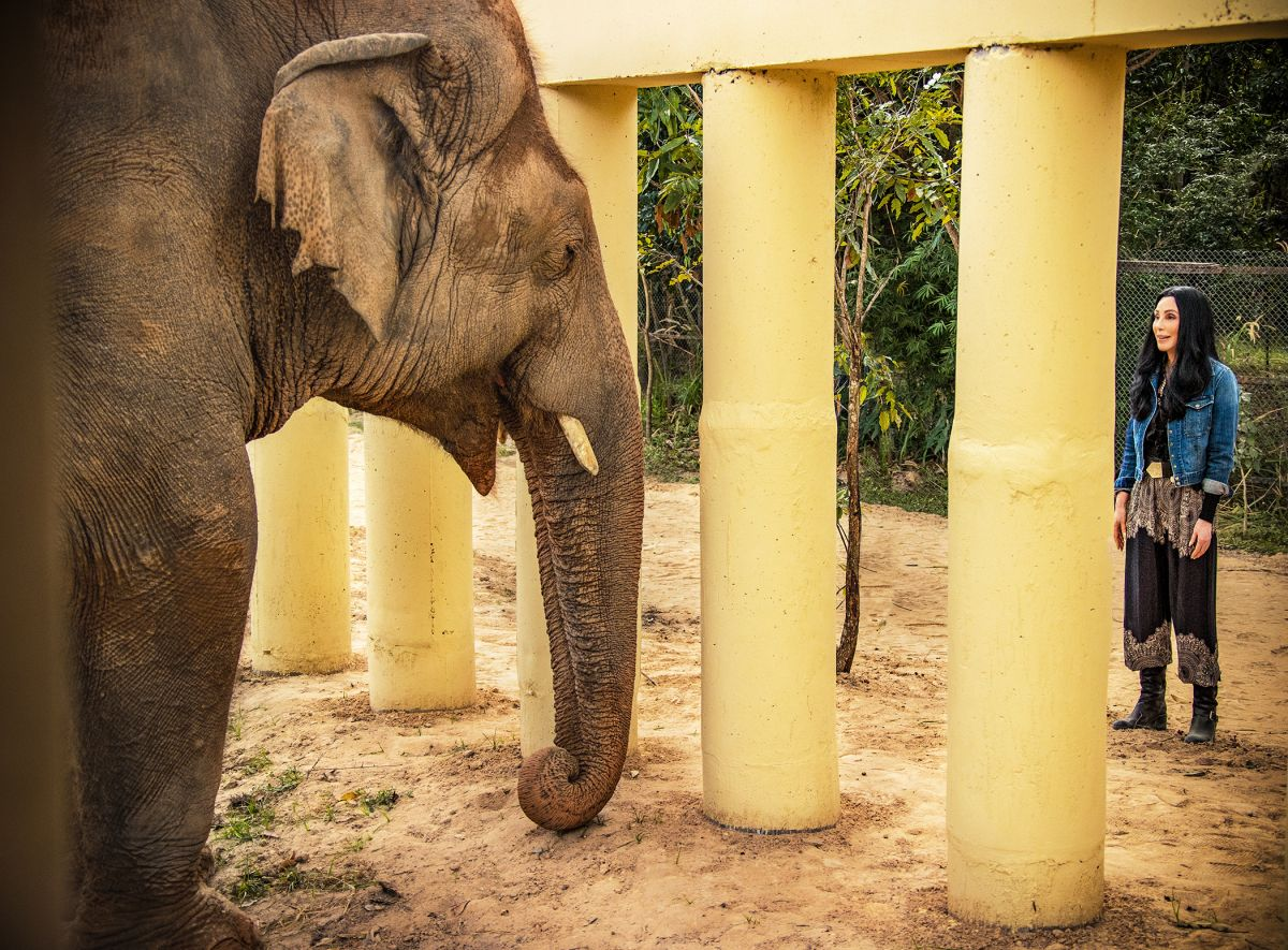 Mistreated elephant Kaavan is rescued by a superstar icon in 'Cher & The Loneliest Elephant'