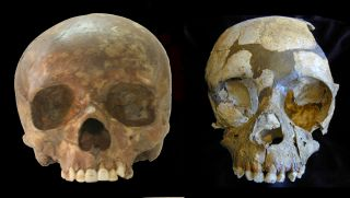 Upper Palaeolithic modern human infant skull from Sungir (left) and the Neandertal infant skull of Roc de Marsal (right).