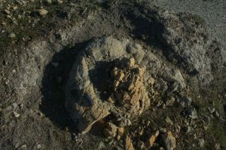 fossil ambergris