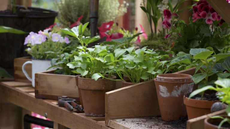 potting up plants in a greenhouse