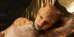 Why You Should See Cats, Even If You Think It Looks Terrible