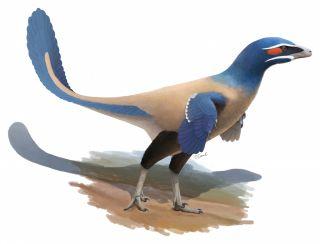 Illustration of Albertavenator dinosaur