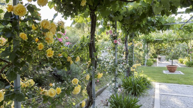 Roses and plant staking in a garden