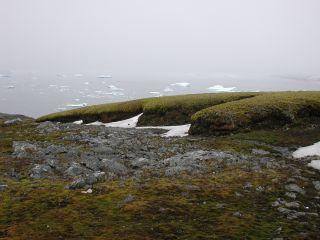Antarctica moss