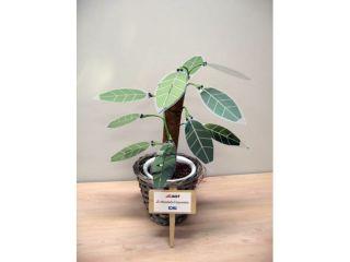 Solar pot plant