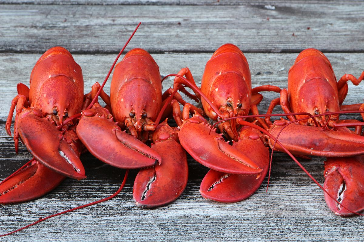 Why Do Lobsters Turn Red When They're Cooked?